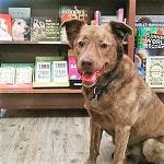 Jackson Brown at Eagle Eye Books