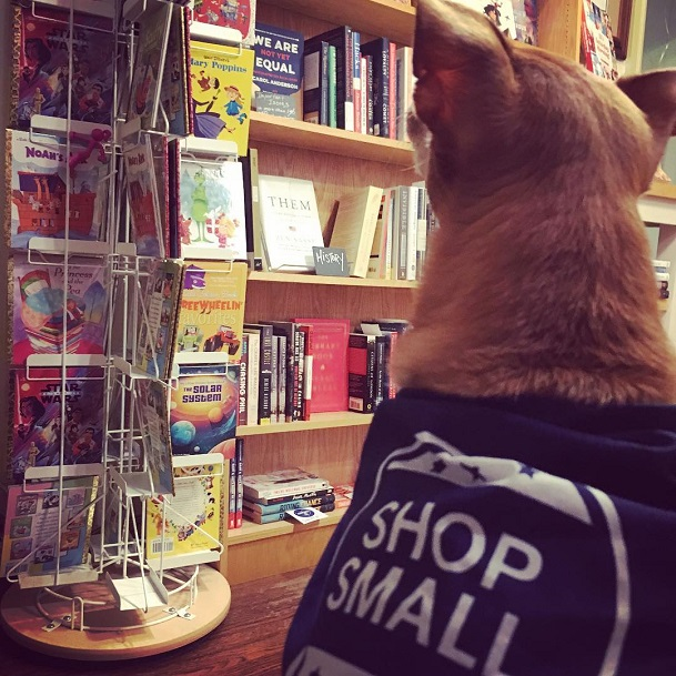 "A dog wearing a ""Shop Small"" sweater at Let's Play Books."