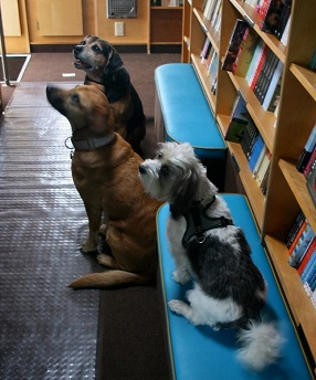 Interior of Parnassus on Wheels with three of the store's dogs