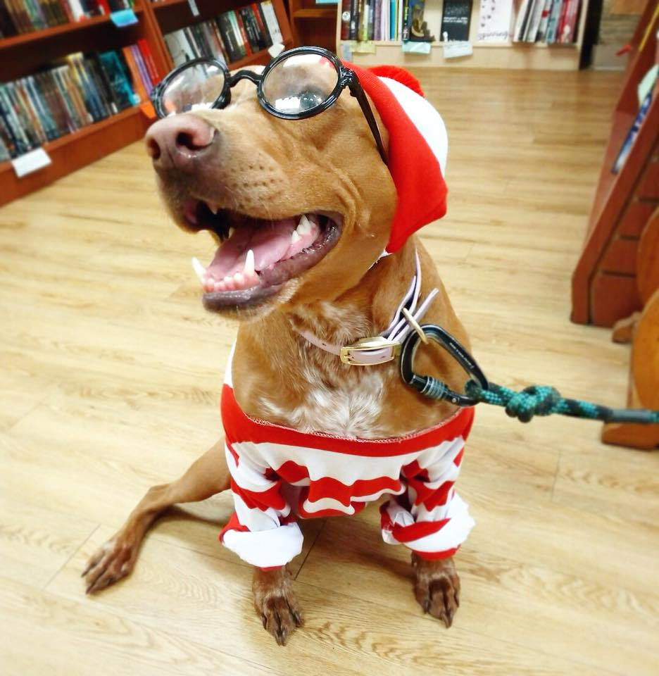 A dog dressed as Waldo at Rediscovered Bookshop in Boise, Idaho.